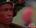 IBGE antecipa dados sobre indígenas e quilombolas